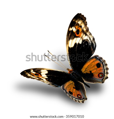 the beautiful flying golden butterfly with nice soft shadow beneath on white background, blue pansy butterfly in fancy color profile - stock photo