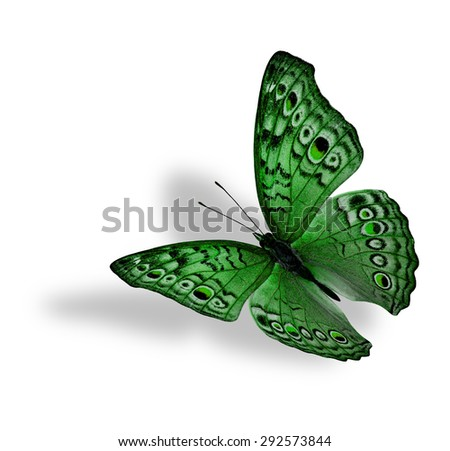 The beautiful flying green butterfly (Junonia atlites ) isolated on white background with soft shadow beneath - stock photo