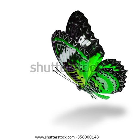 The beautiful flying green butterfly, Leopard Lacewing butterfly (Cethosia cyane) in fancy color profile on white background with soft shadow beneath - stock photo