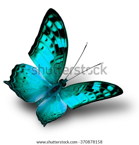 The beautiful flying green butterfly on white background with shade beneath - stock photo