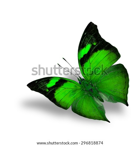 The beautiful flying green butterfly on white background with shadow beneath - stock photo