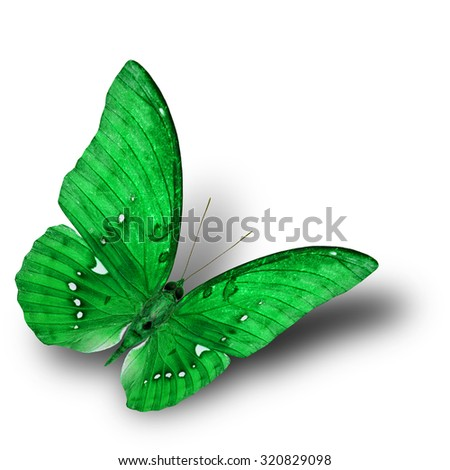 The beautiful flying green butterfly on white background with soft shadow beneath - stock photo