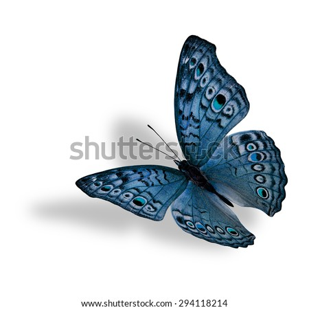 The beautiful flying light blue butterfly (Junonia atlites ) isolated on white background with soft shadow beneath - stock photo