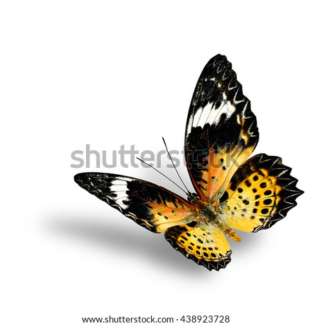 The beautiful flying orange and yellow butterfly, female of Leopard Lacewing butterfly in original color profile on white background with soft shadow beneath - stock photo
