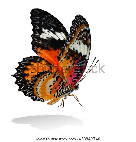 The beautiful flying orange butterfly, Leopard Lacewing butterfly in fancy color profile on white background with all legs body and wings details and soft shadow beneath - stock photo