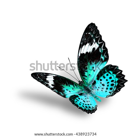 The beautiful flying pale green butterfly, female of Leopard Lacewing butterfly in fancyl color profile on white background with soft shadow beneath - stock photo