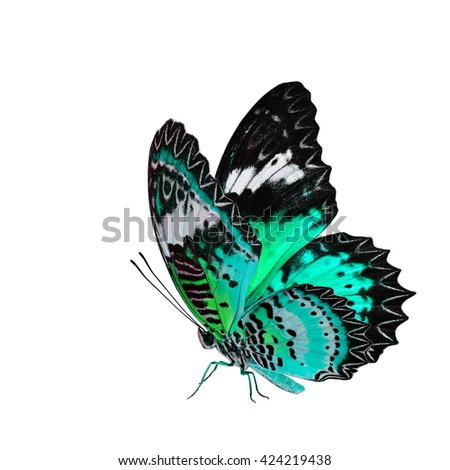 The beautiful flying pale green butterfly, Leopard Lacewing butterfly in fancy color profile isolated on white background with all legs body and wings