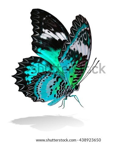The beautiful flying pale green butterfly, Leopard Lacewing butterfly in fancy color profile on white background with all legs body and wings details and soft shadow beneath - stock photo