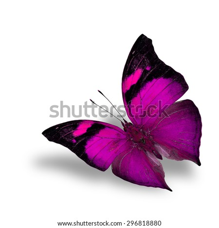 The beautiful flying pink butterfly on white background with shadow beneath - stock photo