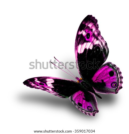 the beautiful flying pink butterfly with nice soft shadow beneath on white background, blue pansy butterfly in fancy color profile - stock photo
