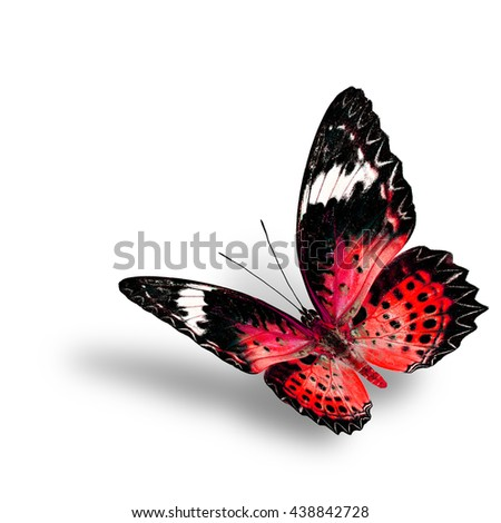 The beautiful flying red butterfly, female of Leopard Lacewing butterfly in fancyl color profile on white background with soft shadow beneath - stock photo