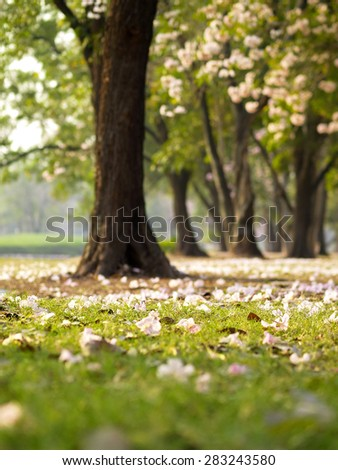 the beautiful garden        - stock photo