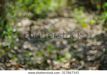 the beautiful geen bokeh nature on the day time in the park