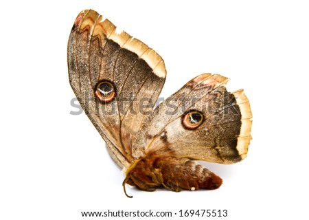 Silk Moth Stock Images, Royalty-Free Images & Vectors ...