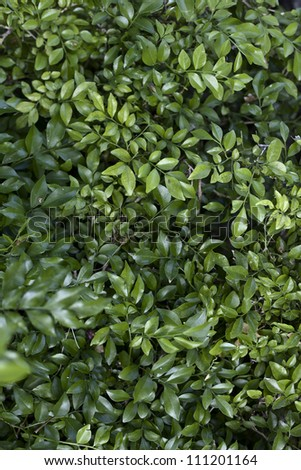 The Beautiful green leaves for your design - stock photo