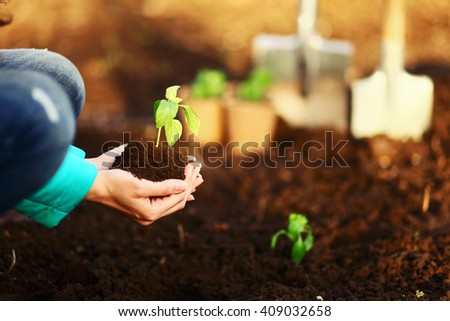 The Beautiful little seedlings in cups close up. - stock photo