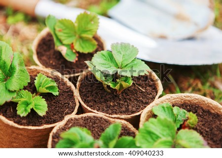 The Beautiful little seedlings in cups close up.