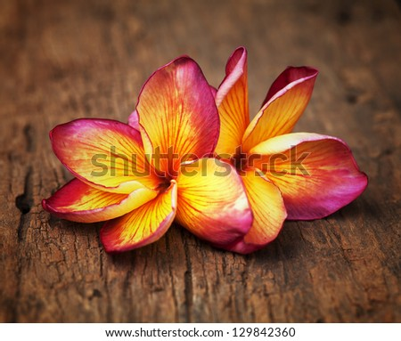 The beautiful Plumeria flower on the old wood background - stock photo