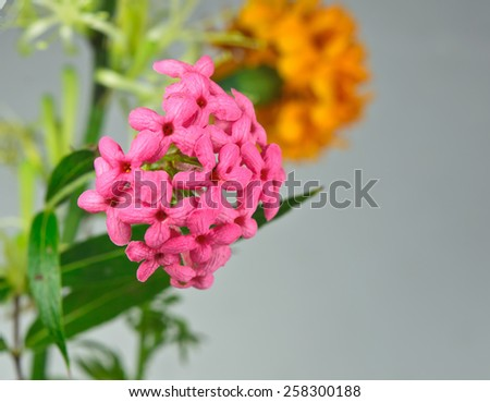 the Beautiful red flowers spike. - stock photo