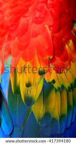 The beautiful red yellow and blue of Scarlet Macaw parrot bird wing feathers, amazing texture - stock photo