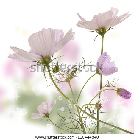 The beautiful spring flower - stock photo