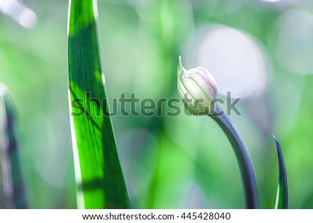 The Beautiful spring flowers background. Nature bokeh - stock photo
