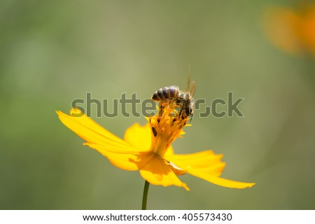 The bee is at the top enjoying flower honey. - stock photo