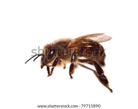 The bee on a white background - stock photo