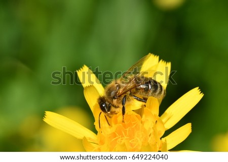 The bee polinates on the flower