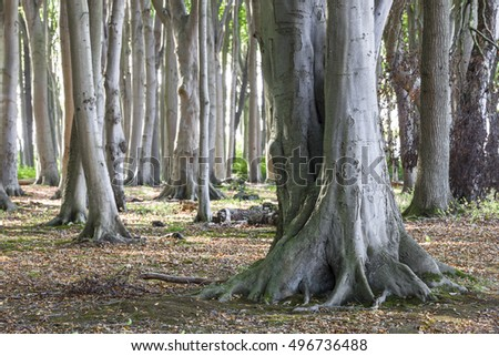 The beech forest near Rostock is called Ghost Wood by the locals