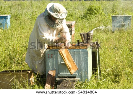 The beekeeper gets frameworks from beehives in the field near wood