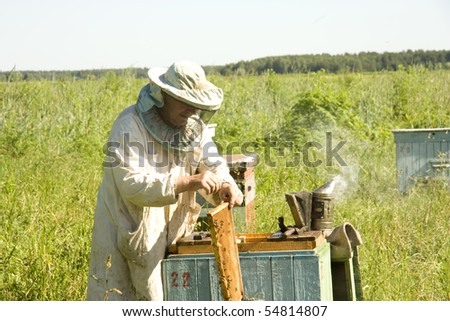 The beekeeper gets frameworks from beehives in the field near wood - stock photo