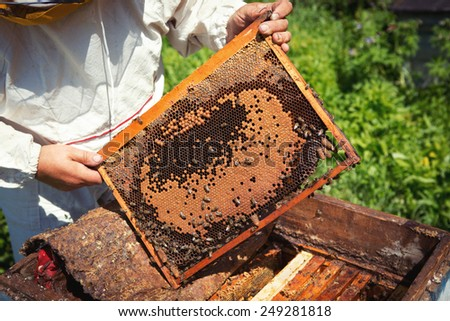 The beekeeper has control over a framework with honey - stock photo