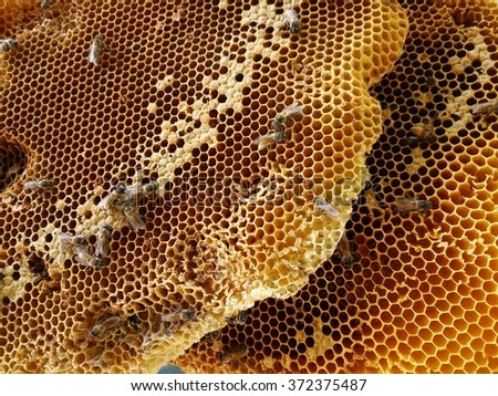 the bees and the honeycomb