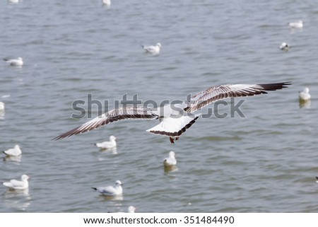 The behind of white seagull bird that is flying over the sea - stock photo