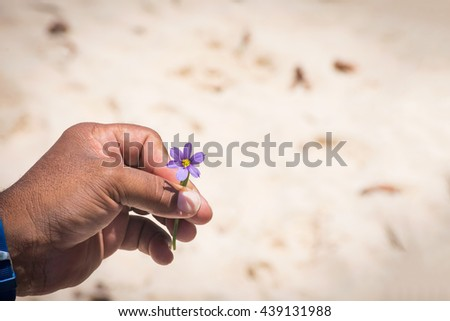 The bermudiana, the National flower of Bermuda in  the hand of a local tour guide. - stock photo