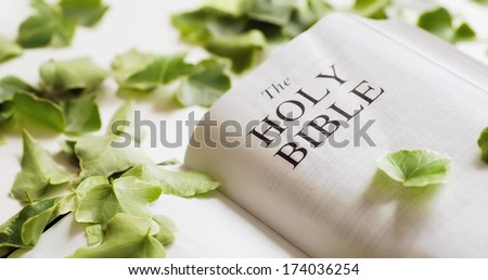 The Bible Among Leaves - stock photo