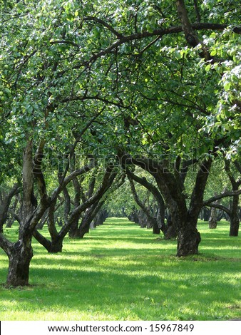 The big apple garden with large old trees and a green grass a years sunny day - stock photo