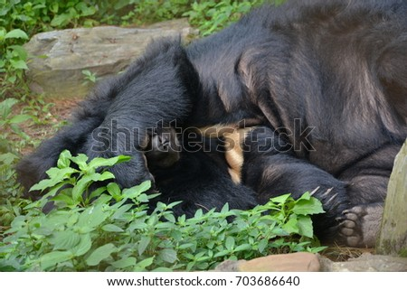 The big black bear sleeps in the middle of the forest.