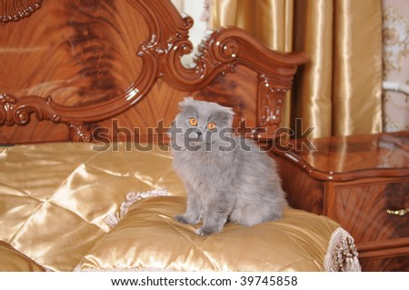 The big cat sits on a luxury bed in hotel - stock photo