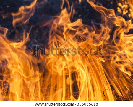 The big extensive fire in the field. Close up. - stock photo
