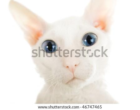 The big eyed cat on the white background - stock photo