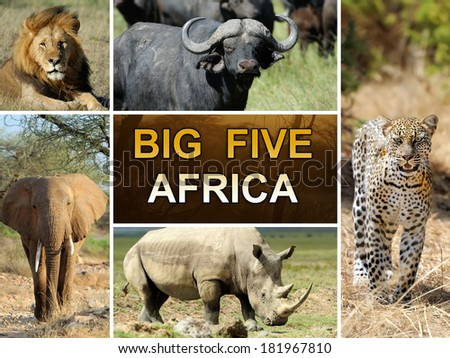 The Big Five - Lion, Elephant, Leopard, Buffalo and Rhinoceros - stock photo