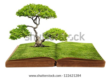 The big tree growing from a book - stock photo