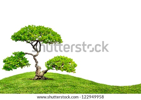 The big tree on green grass - stock photo