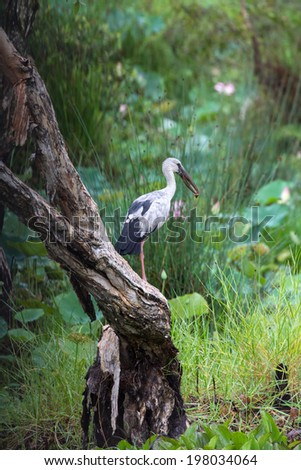 the bird eating under the tree  beside river  - stock photo