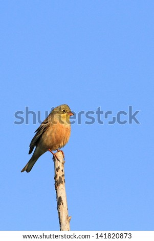 The bird sits on a branch against the sky