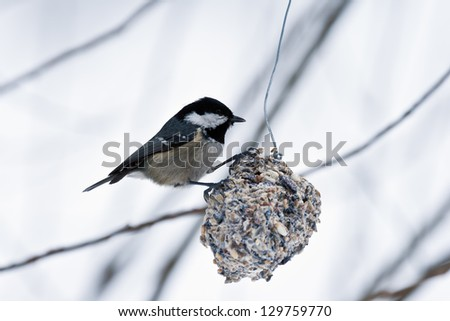 The birds and winter - stock photo
