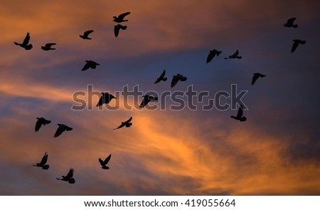 the birds are flying in the morning colorful sky