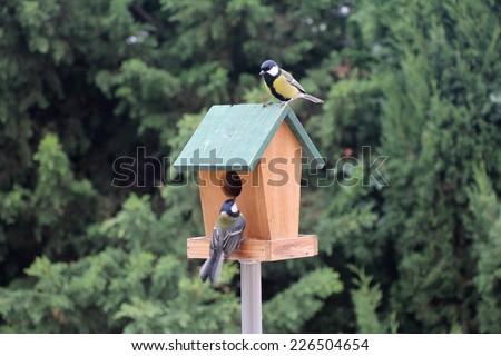 The Birds Titmouse feeding on a small wooden birds house - stock photo